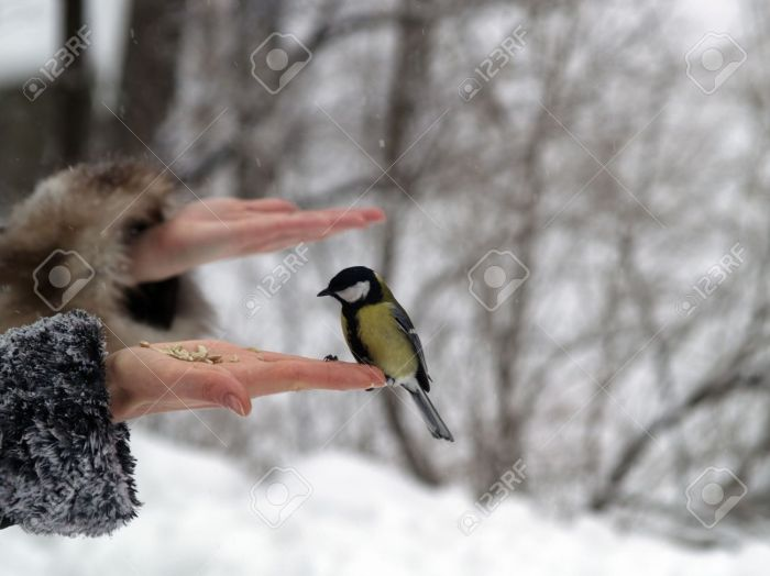 Small-titmouse-bird-in-women-s-hand-winter